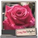 DECOROSIER® Crazy pink voluptia®