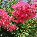 Plantes de climat doux