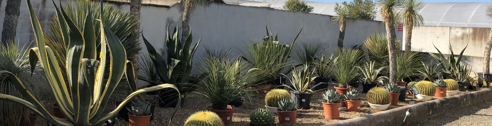 Nos plantes xénophites