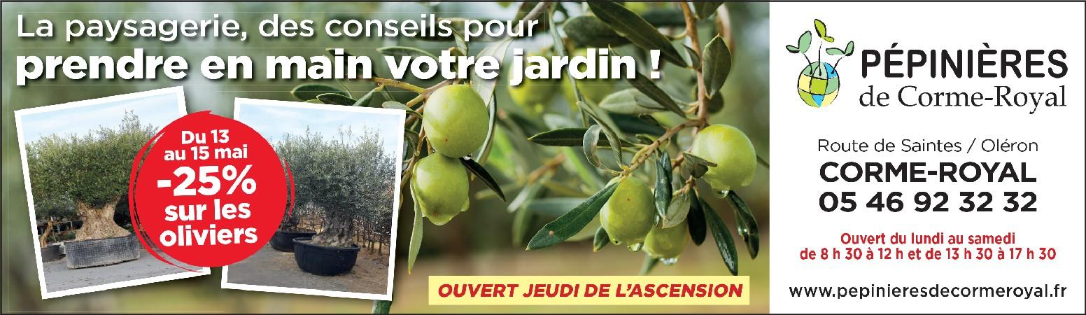 Offre sur les oliviers